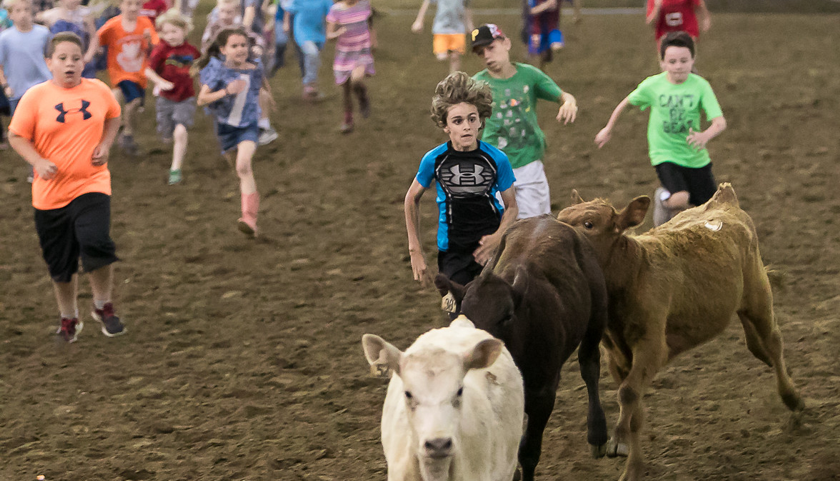 Mutton Bustin Gives Little Buckaroos A Chance To Shine At