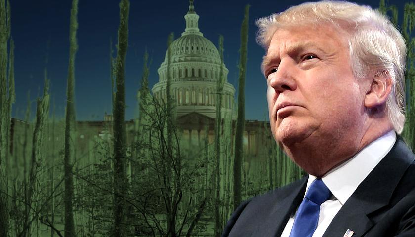 Drain the Swamp, Donald Trump