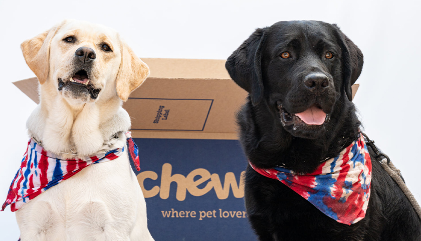 A golden lab and black lab in front of a Chewy box